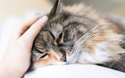 5 Signs that Show Your Cat is Unhealthy