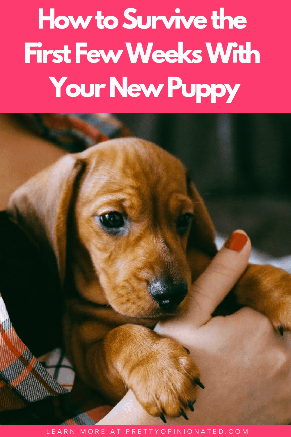 If there's one thing about owning a dog that no one is truly prepared for, it's how to survive the first few weeks with your new puppy. These tips will help!
