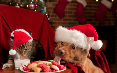 20 Cute & Funny Cats & Dogs Celebrating Christmas to Make You Smile