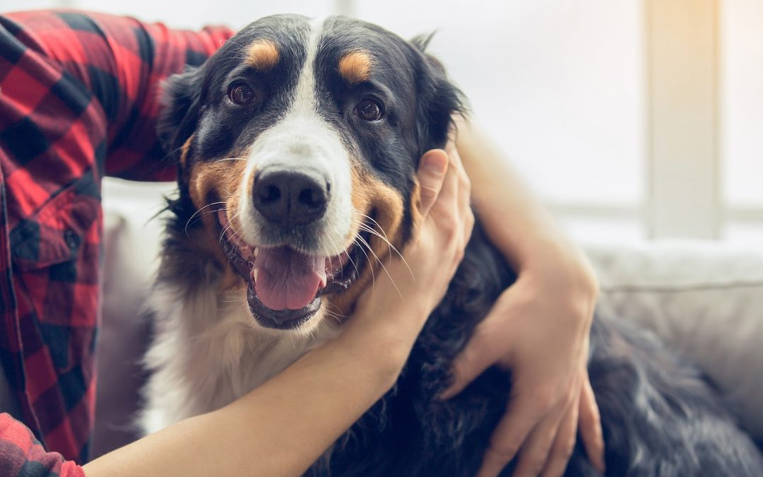 What You Need to Know About CBD Oil for Pets