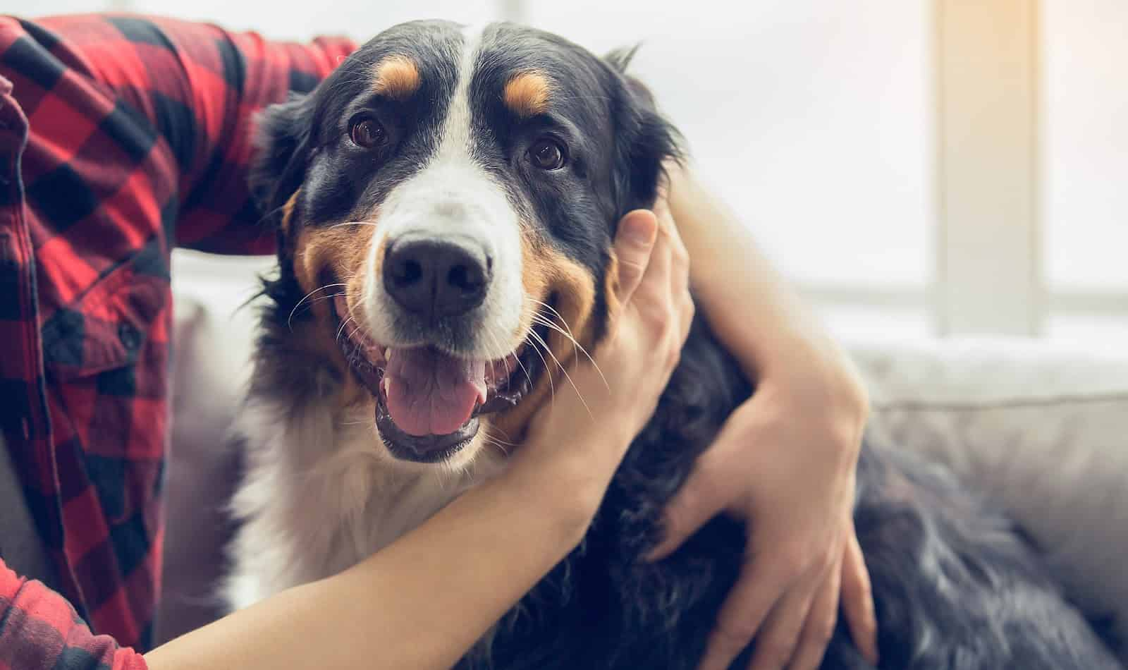 CBD oil for pets facts
