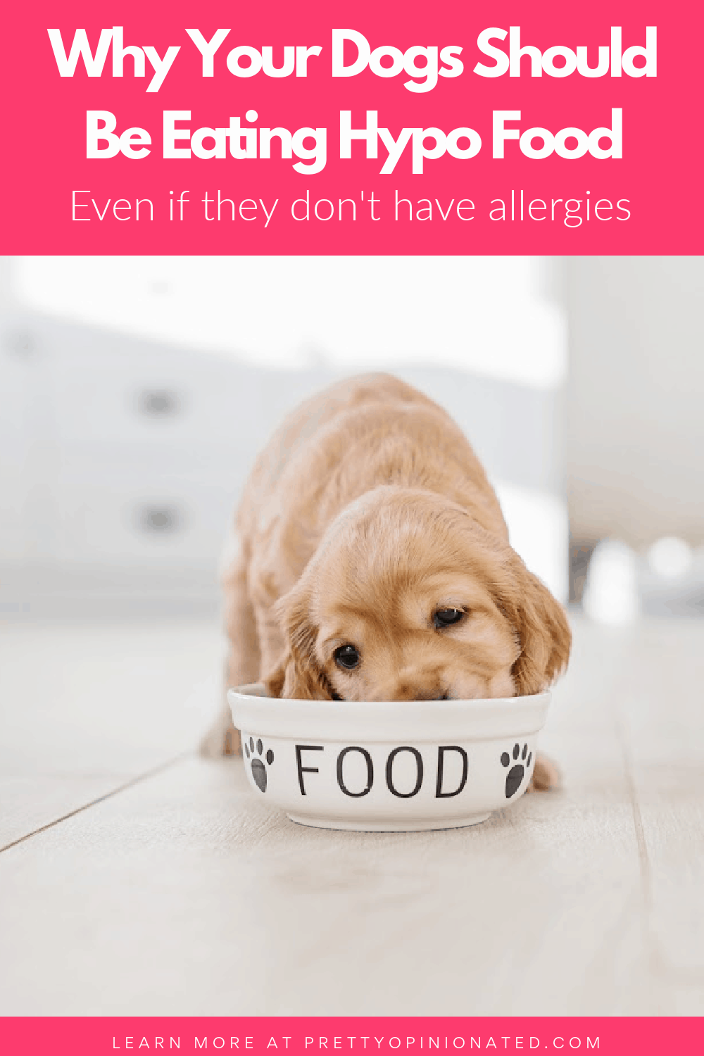 puppy eating out of a dog food bowl