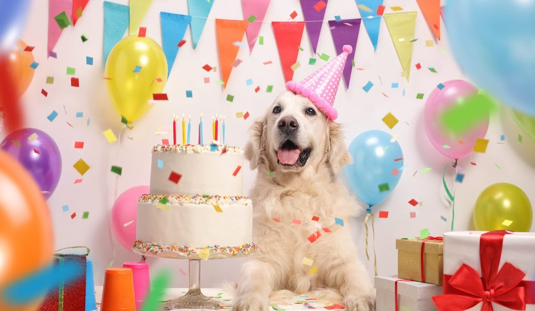10 Adorable Dog Birthday Gift Ideas for Your Spoiled Pooch