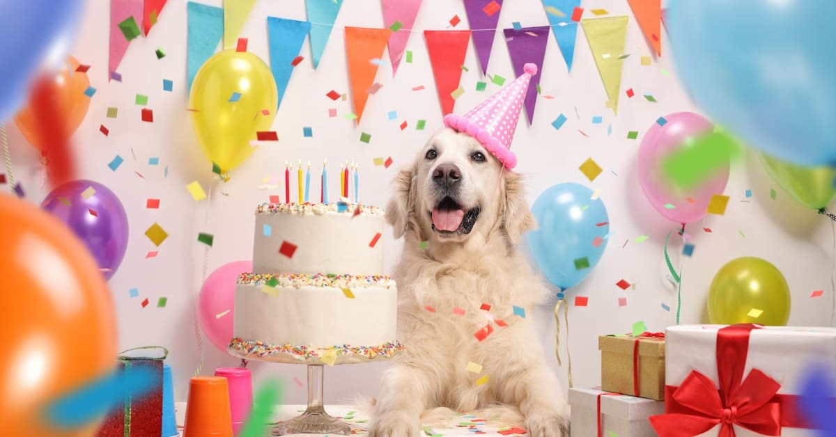 """From adorable homemade cakes and """"Barkcuterie"""" boards to toys that sing to boxes loaded with fun goodies, these are by far the cutest and best dog birthday gift ideas around. Check them out!"""